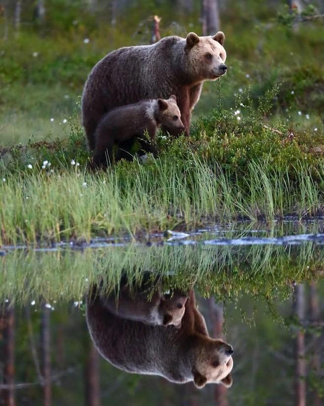 Kỳ công săn ảnh động vật hoang dã ở nơi nguy hiểm nhất thế giới - Ảnh 8.