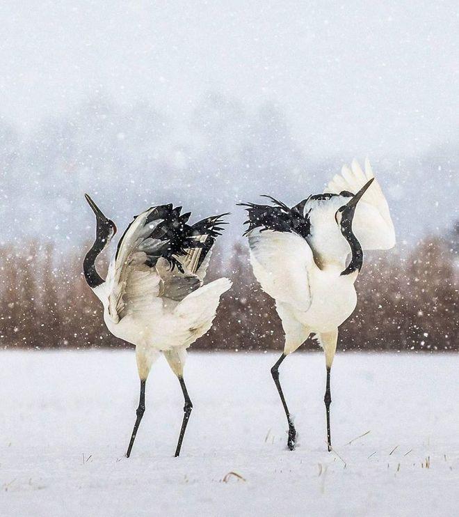 Kỳ công săn ảnh động vật hoang dã ở nơi nguy hiểm nhất thế giới - Ảnh 9.