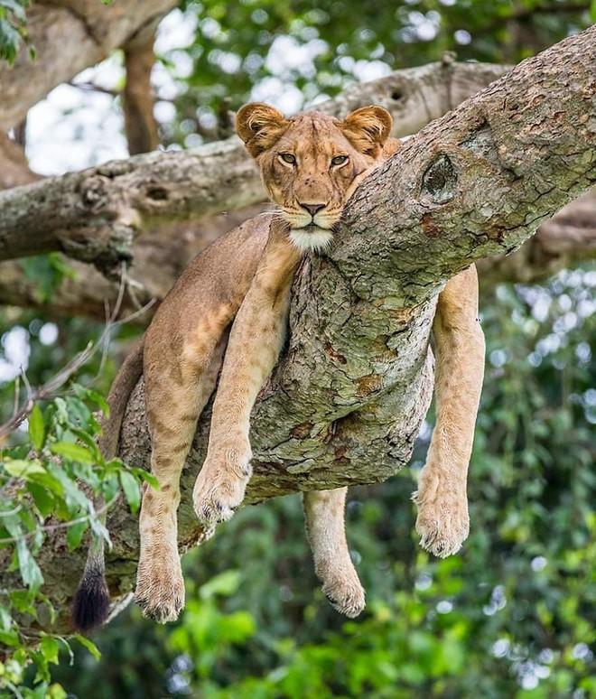 Kỳ công săn ảnh động vật hoang dã ở nơi nguy hiểm nhất thế giới - Ảnh 10.
