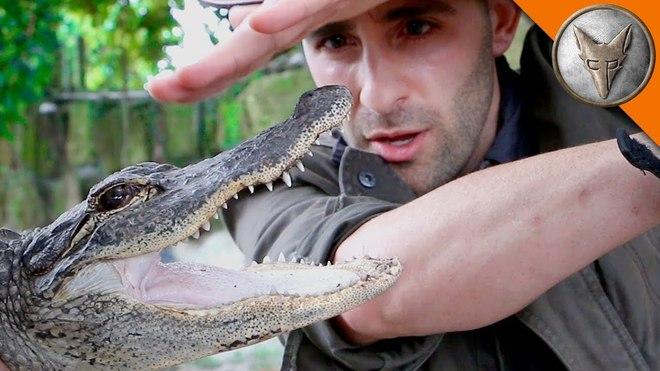Liều lĩnh cho loài cá sấu có lực cắn khét tiếng cắn vào tay, điều gì xảy ra sau đó? - Ảnh 1.