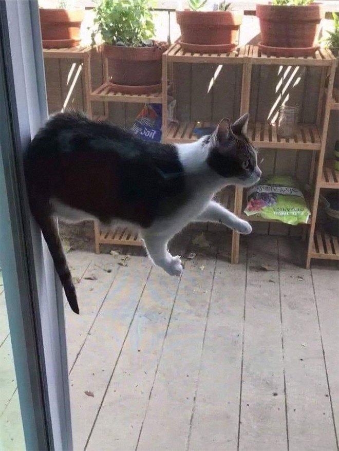 18 con mèo không thích nghe lời chủ và loạt khoảnh khắc chống lại mọi định luật vật lý - Ảnh 10.