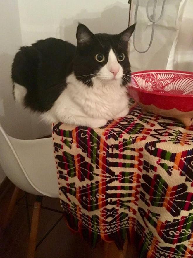 18 con mèo không thích nghe lời chủ và loạt khoảnh khắc chống lại mọi định luật vật lý - Ảnh 13.