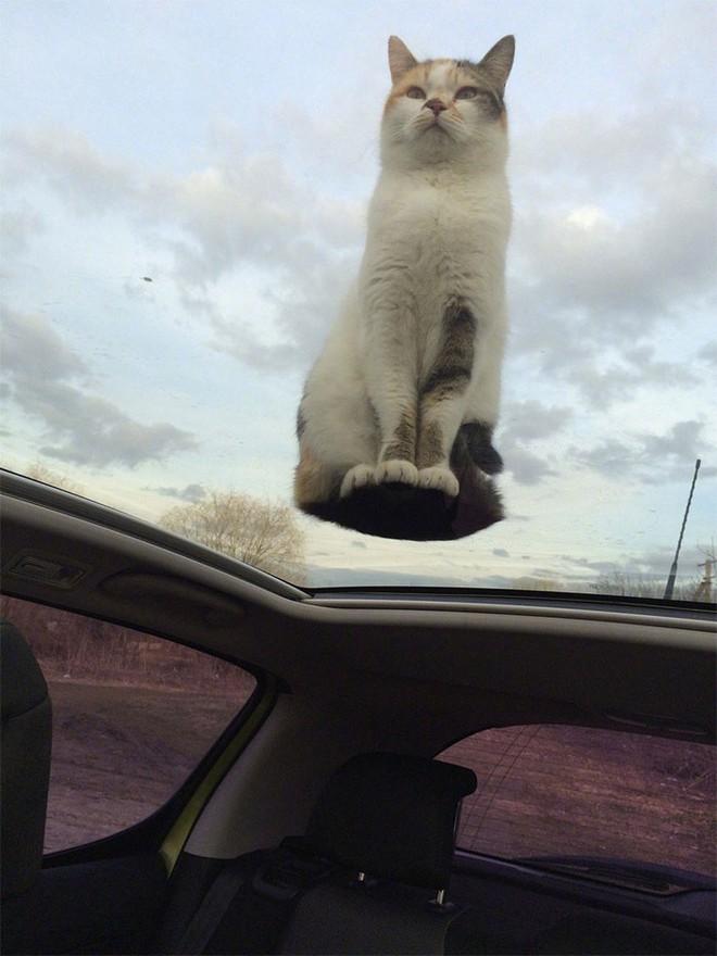 18 con mèo không thích nghe lời chủ và loạt khoảnh khắc chống lại mọi định luật vật lý - Ảnh 14.