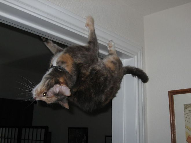 18 con mèo không thích nghe lời chủ và loạt khoảnh khắc chống lại mọi định luật vật lý - Ảnh 15.
