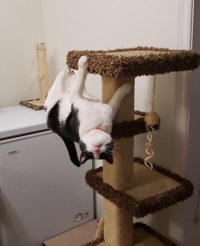 18 con mèo không thích nghe lời chủ và loạt khoảnh khắc chống lại mọi định luật vật lý - Ảnh 16.