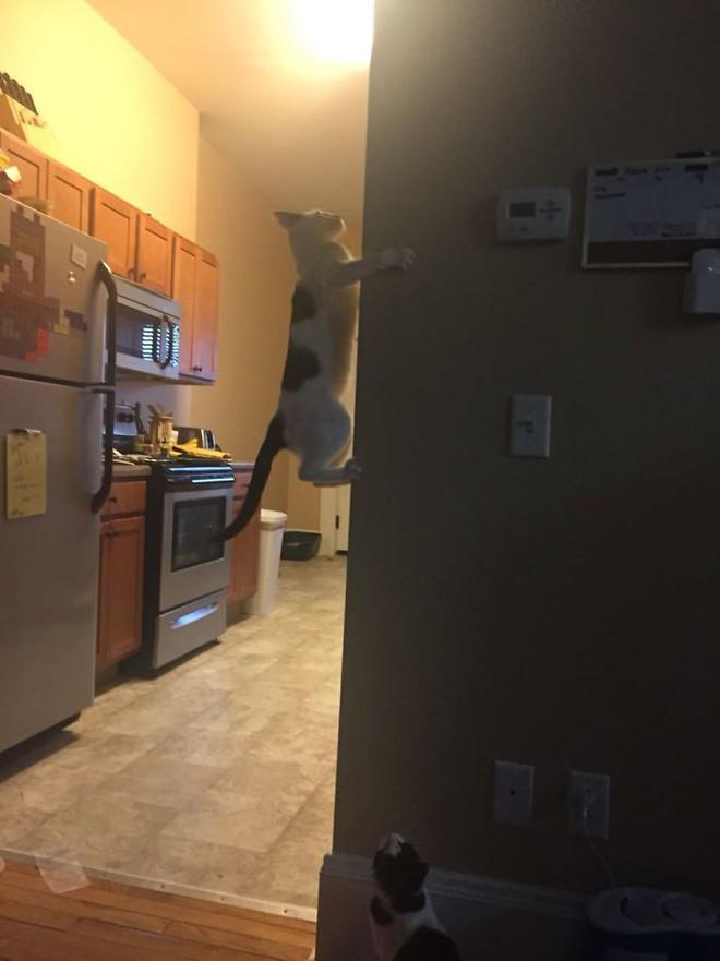 18 con mèo không thích nghe lời chủ và loạt khoảnh khắc chống lại mọi định luật vật lý - Ảnh 17.