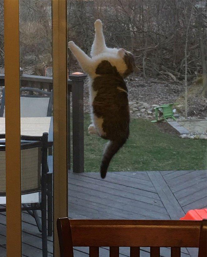 18 con mèo không thích nghe lời chủ và loạt khoảnh khắc chống lại mọi định luật vật lý - Ảnh 18.