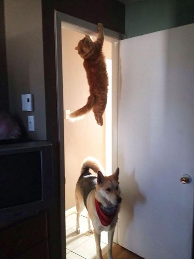 18 con mèo không thích nghe lời chủ và loạt khoảnh khắc chống lại mọi định luật vật lý - Ảnh 2.