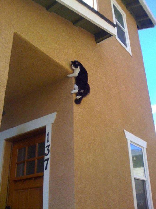 18 con mèo không thích nghe lời chủ và loạt khoảnh khắc chống lại mọi định luật vật lý - Ảnh 4.