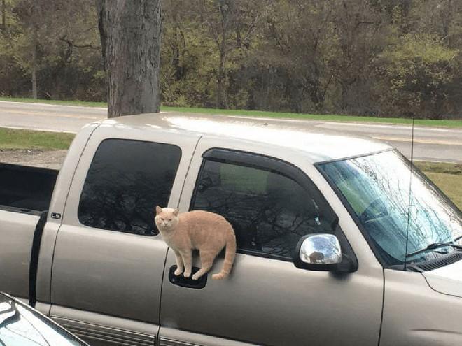 18 con mèo không thích nghe lời chủ và loạt khoảnh khắc chống lại mọi định luật vật lý - Ảnh 5.