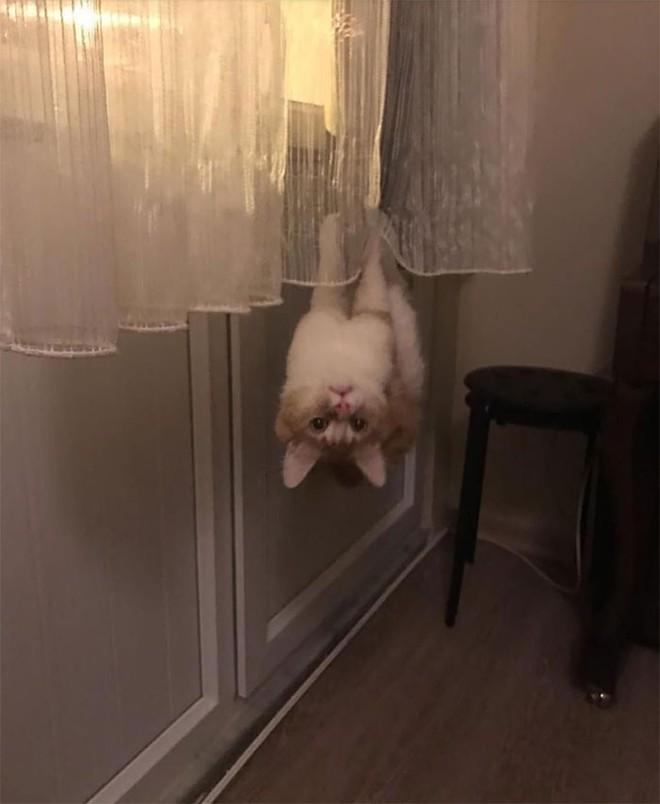 18 con mèo không thích nghe lời chủ và loạt khoảnh khắc chống lại mọi định luật vật lý - Ảnh 6.