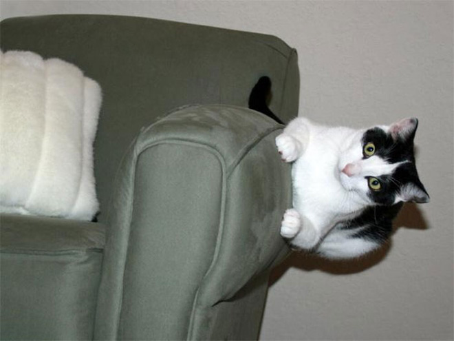 18 con mèo không thích nghe lời chủ và loạt khoảnh khắc chống lại mọi định luật vật lý - Ảnh 8.