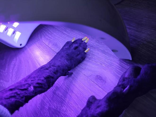 Chú chó điệu chảy nước sắp lên chức bố vẫn sơn móng đính đá, xu nịnh phụ huynh khiến anh chủ mếu máo vì bị thành con ghẻ - Ảnh 4.