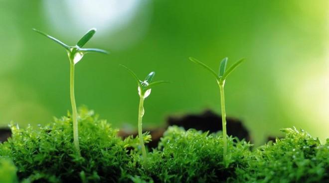 Từ việc chăm sóc cây, sư thầy chỉ ra 4 việc cần phải áp dụng để nuôi dạy trẻ nên người: Các bậc cha mẹ nên biết! - Ảnh 1.