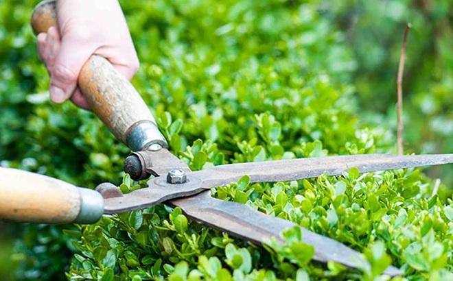 Từ việc chăm sóc cây, sư thầy chỉ ra 4 việc cần phải áp dụng để nuôi dạy trẻ nên người: Các bậc cha mẹ nên biết!