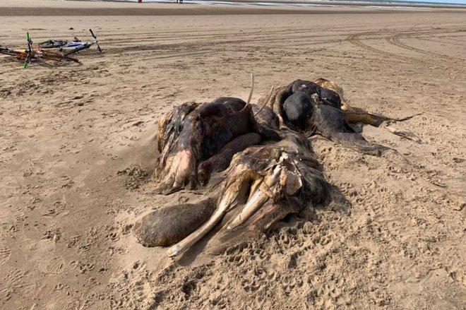 Sinh vật lạ khổng lồ trôi dạt vào bờ biển Anh, người dân hoang mang không biết là con gì - Ảnh 1.