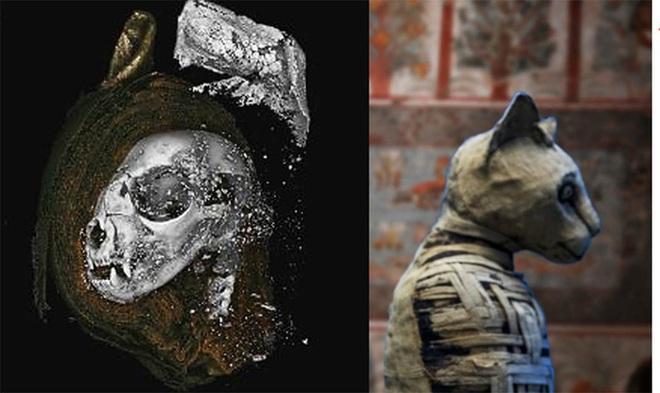 Sự thật về xác ướp thiêng không phải con người trong mộ cổ Ai Cập - Ảnh 1.