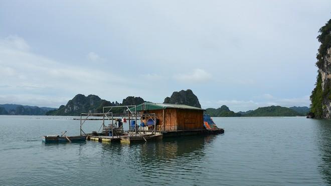Bắt 14 đối tượng đánh bạc trên biển Quảng Ninh - Ảnh 1.