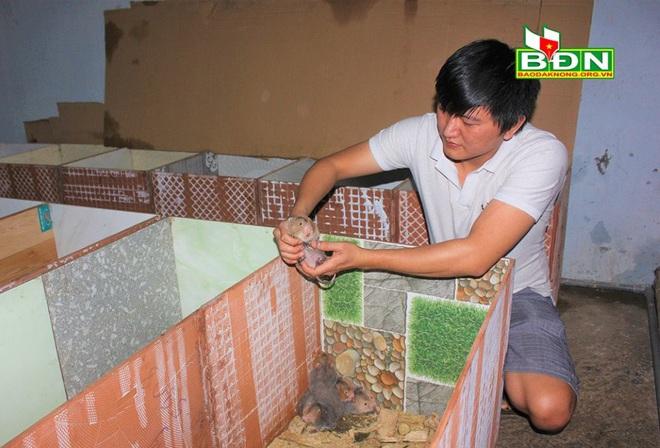 Đắk Nông: Nhốt loài thú ham ăn tre nứa ở trong nhà, trai Đắk Nông nuôi không kịp để bán - Ảnh 1.