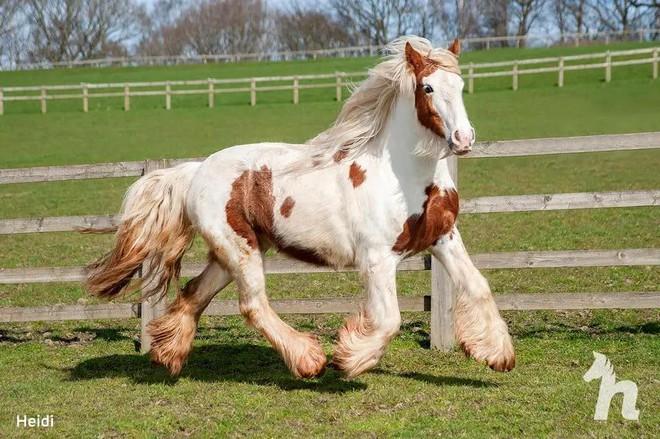 Cuộc lột xác thần kỳ của chú ngựa Pony: Từ xác khô trộn bùn đến tấm thân đẹp rực rỡ - Ảnh 7.