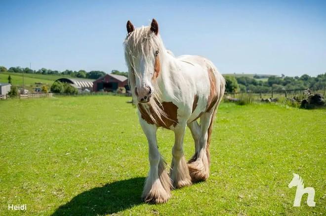 Cuộc lột xác thần kỳ của chú ngựa Pony: Từ xác khô trộn bùn đến tấm thân đẹp rực rỡ - Ảnh 8.