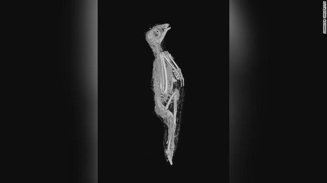 Hé lộ bí mật đáng sợ về 3 xác ướp Ai Cập: Mèo đầu lìa khỏi thân, rắn hổ mang bị bẻ cổ! - Ảnh 5.