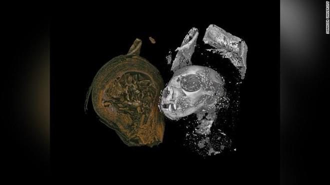 Hé lộ bí mật đáng sợ về 3 xác ướp Ai Cập: Mèo đầu lìa khỏi thân, rắn hổ mang bị bẻ cổ! - Ảnh 2.