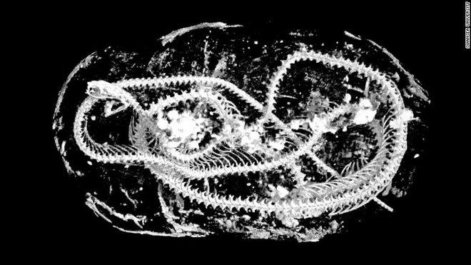 Hé lộ bí mật đáng sợ về 3 xác ướp Ai Cập: Mèo đầu lìa khỏi thân, rắn hổ mang bị bẻ cổ! - Ảnh 4.