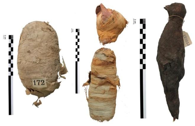 Hé lộ bí mật đáng sợ về 3 xác ướp Ai Cập: Mèo đầu lìa khỏi thân, rắn hổ mang bị bẻ cổ! - Ảnh 1.