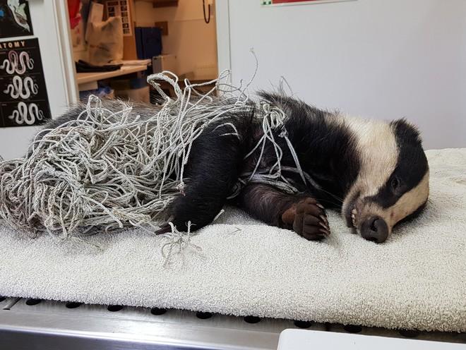 Phát hiện con vật như cún con cứng đơ trong bùn đất, công nhân vội vã mang đến bệnh viện và ngã ngửa khi biết danh tính thật - Ảnh 10.