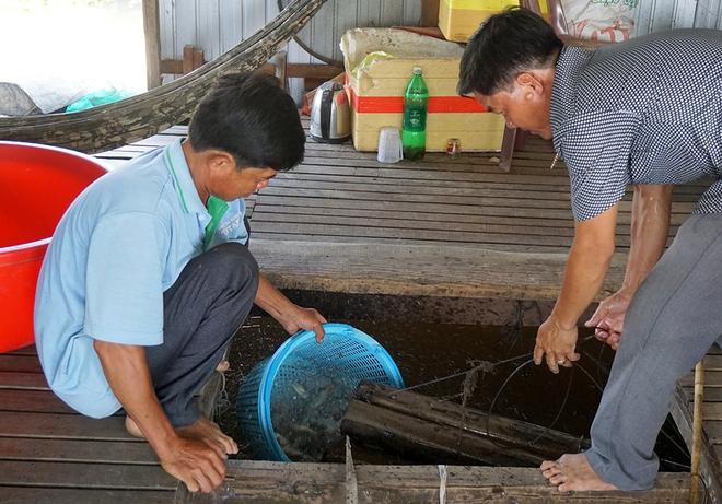 Hiệu quả kinh tế từ nuôi cá heo đuôi đỏ - Ảnh 1.