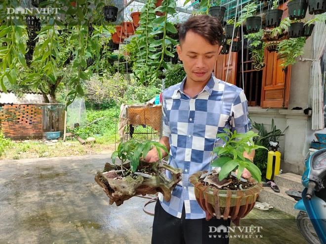 Quảng Ninh: Vườn lan phi điệp 500 giò giữa biển khơi, lan đột biến bán mỗi giò giá 30 triệu - Ảnh 2.