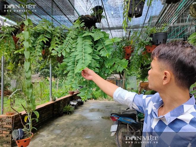 Quảng Ninh: Vườn lan phi điệp 500 giò giữa biển khơi, lan đột biến bán mỗi giò giá 30 triệu - Ảnh 3.