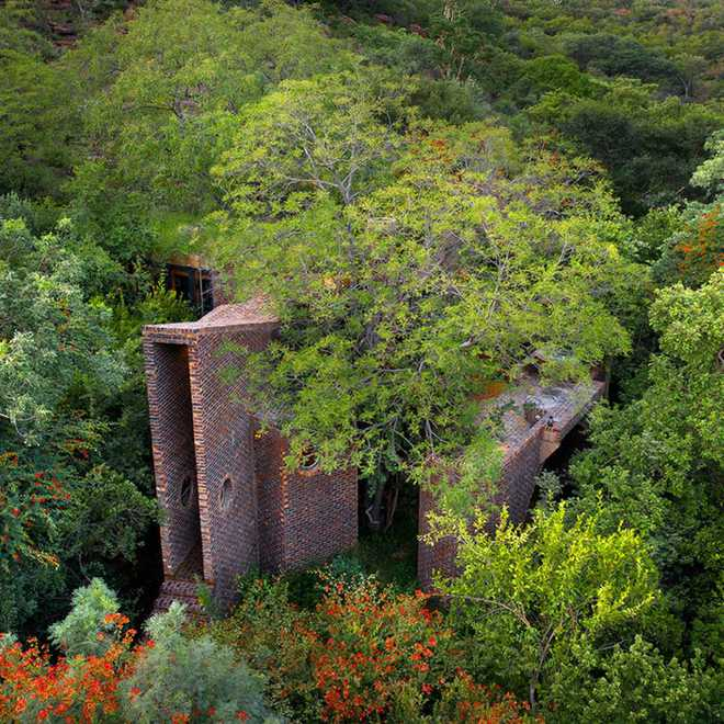 Ngôi nhà siêu dị được thiết kế để ẩn mình trong tán cây - Ảnh 5.