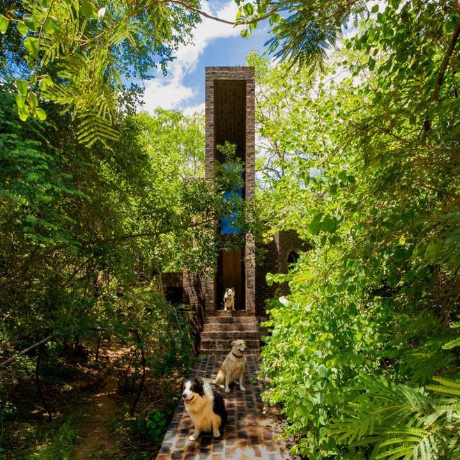 Ngôi nhà siêu dị được thiết kế để ẩn mình trong tán cây - Ảnh 6.