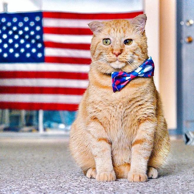 Chú mèo buồn nhất thế gian với đôi mắt như rỉ máu: Điều gì làm nên cuộc lột xác diệu kỳ? - Ảnh 9.