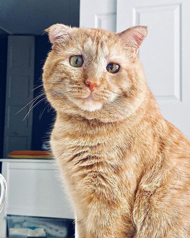 Chú mèo buồn nhất thế gian với đôi mắt như rỉ máu: Điều gì làm nên cuộc lột xác diệu kỳ? - Ảnh 10.