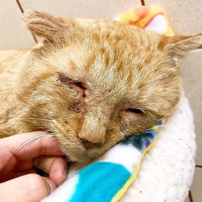 Chú mèo buồn nhất thế gian với đôi mắt như rỉ máu: Điều gì làm nên cuộc lột xác diệu kỳ? - Ảnh 2.