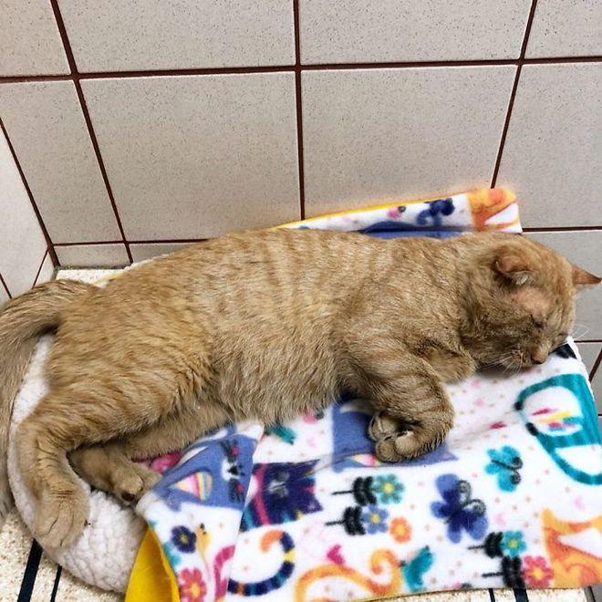 Chú mèo buồn nhất thế gian với đôi mắt như rỉ máu: Điều gì làm nên cuộc lột xác diệu kỳ? - Ảnh 3.
