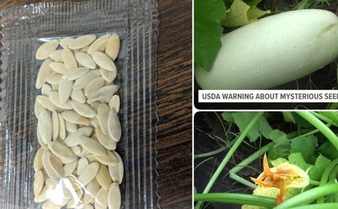 Chưa kịp cảnh báo, nông dân Mỹ đã trồng thử hạt giống bí ẩn từ Trung Quốc và kết quả chúng mọc... 'như điên'