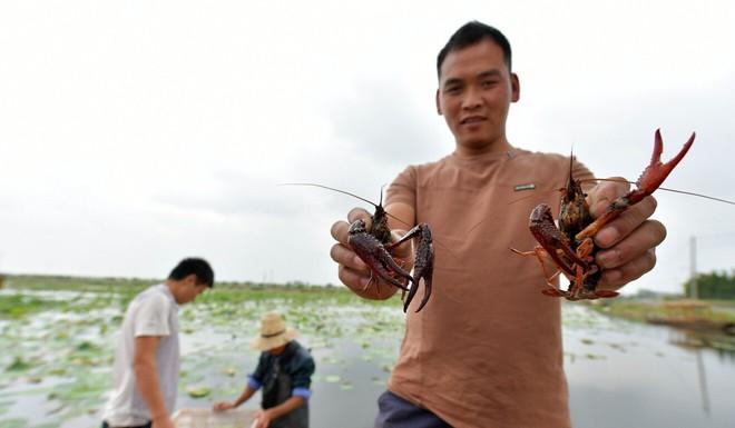 Chạy theo lợi nhuận, nông dân Trung Quốc không ngờ hậu quả khó lường: Tham thì thâm? - Ảnh 1.