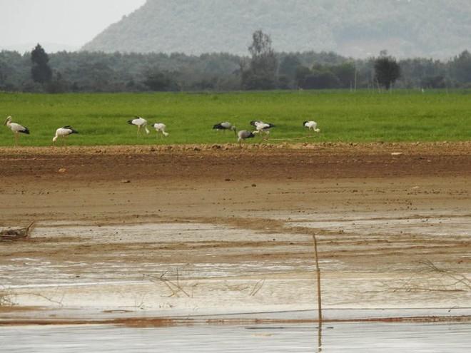 Hàng trăm con chim quý hiếm xuất hiện ở Đồng Nai - Ảnh 1.
