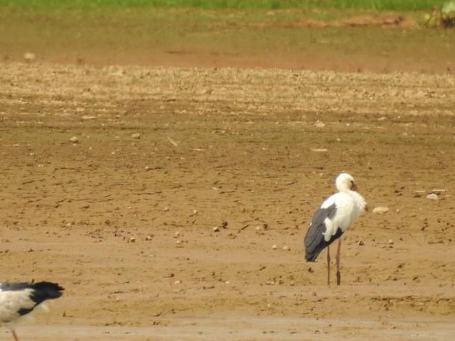 Hàng trăm con chim quý hiếm xuất hiện ở Đồng Nai - Ảnh 2.