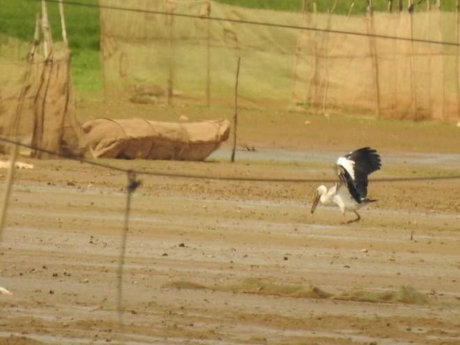 Hàng trăm con chim quý hiếm xuất hiện ở Đồng Nai - Ảnh 3.