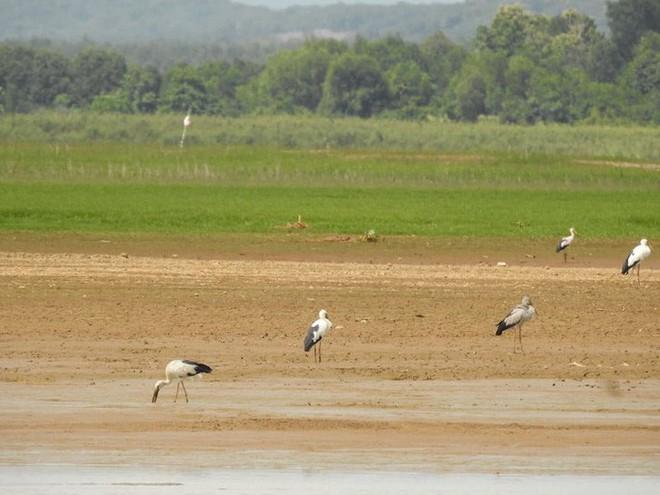 Hàng trăm con chim quý hiếm xuất hiện ở Đồng Nai - Ảnh 4.