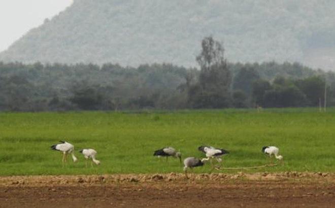 Hàng trăm con chim quý hiếm xuất hiện ở Đồng Nai