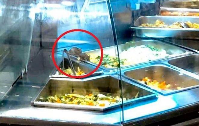 Chuột bò lúc nhúc trong quầy thức ăn tại Aeon Tân Phú TP Hồ Chí Minh - Ảnh 1.