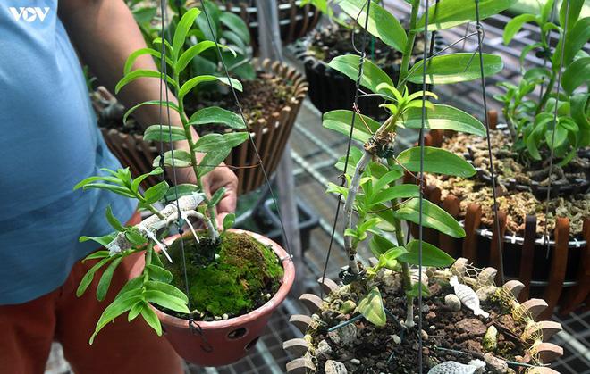 Ảnh: Vườn lan quý hiếm được chăm sóc, bảo vệ hơn cả kho báu - Ảnh 14.