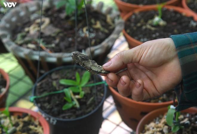 Ảnh: Vườn lan quý hiếm được chăm sóc, bảo vệ hơn cả kho báu - Ảnh 15.