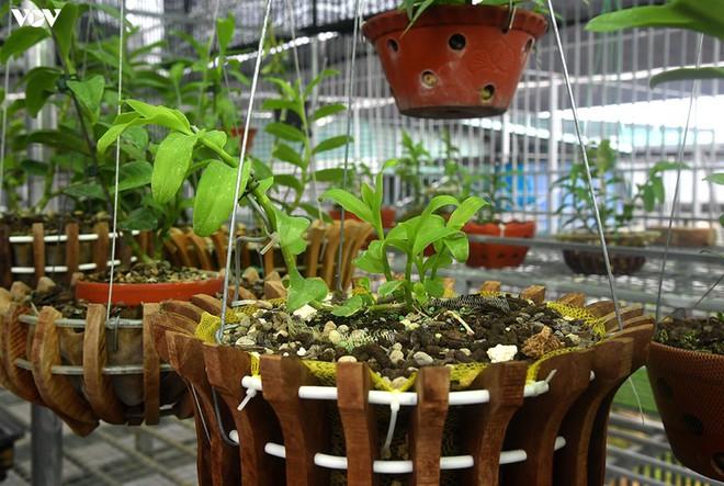 Ảnh: Vườn lan quý hiếm được chăm sóc, bảo vệ hơn cả kho báu - Ảnh 8.